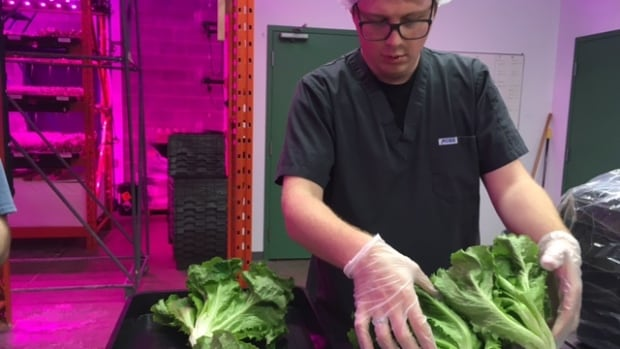 Romaine lettuce linked to food poisoning outbreak in Canada, possibly US