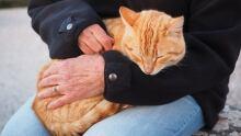 Human sense of touch
