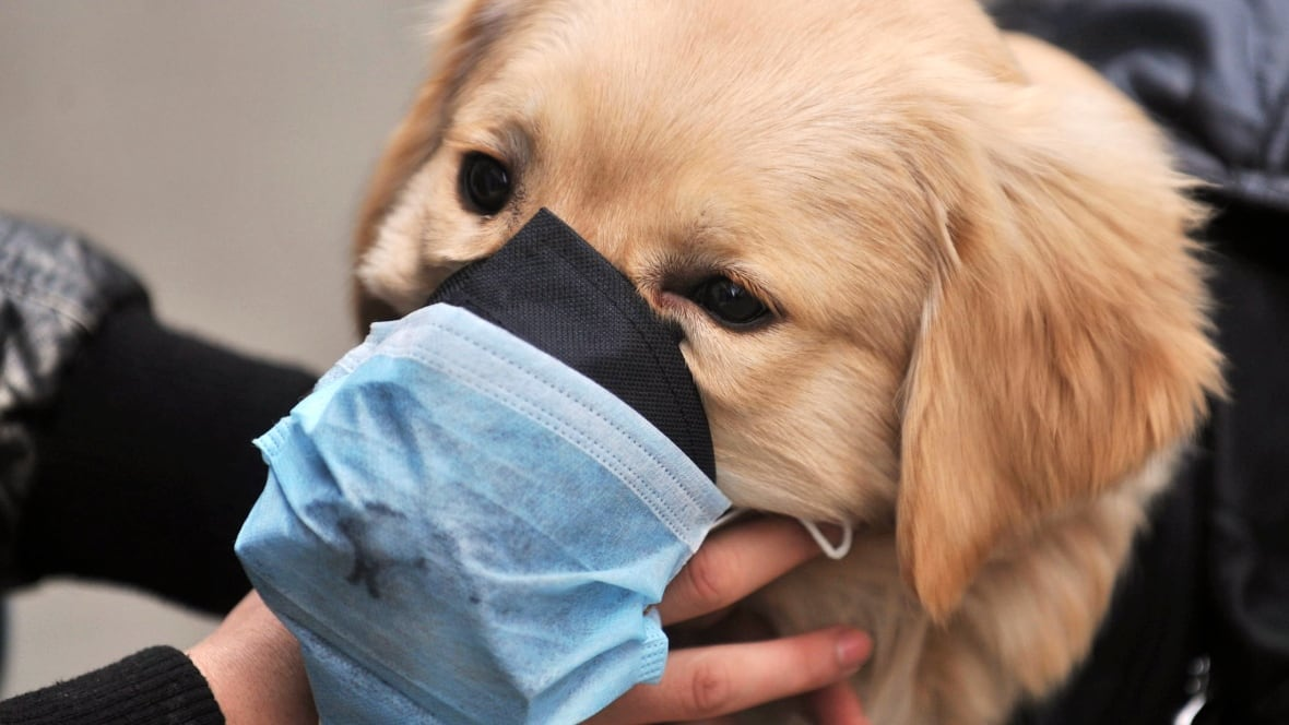 5 more dogs test positive for canine influenza in Canada