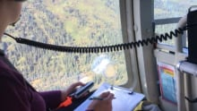 helicopter survey spruce beetle