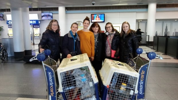 Members of MotorCity Greyhound Rescue posted this photo on Facebook after helping bring greyhound dogs from South Korea to Michigan in December 2017.