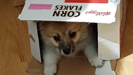 Pupply in cereal box