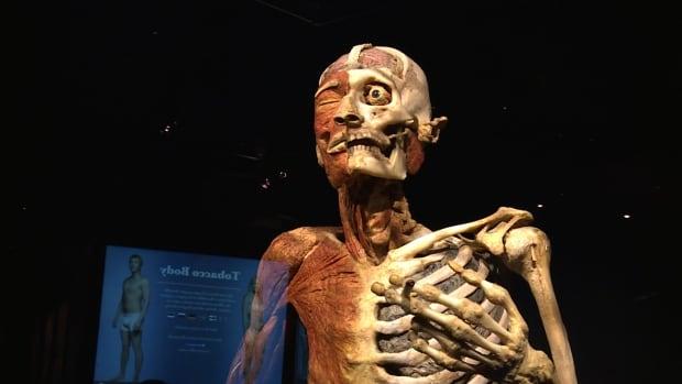 Body Worlds RX Halifax