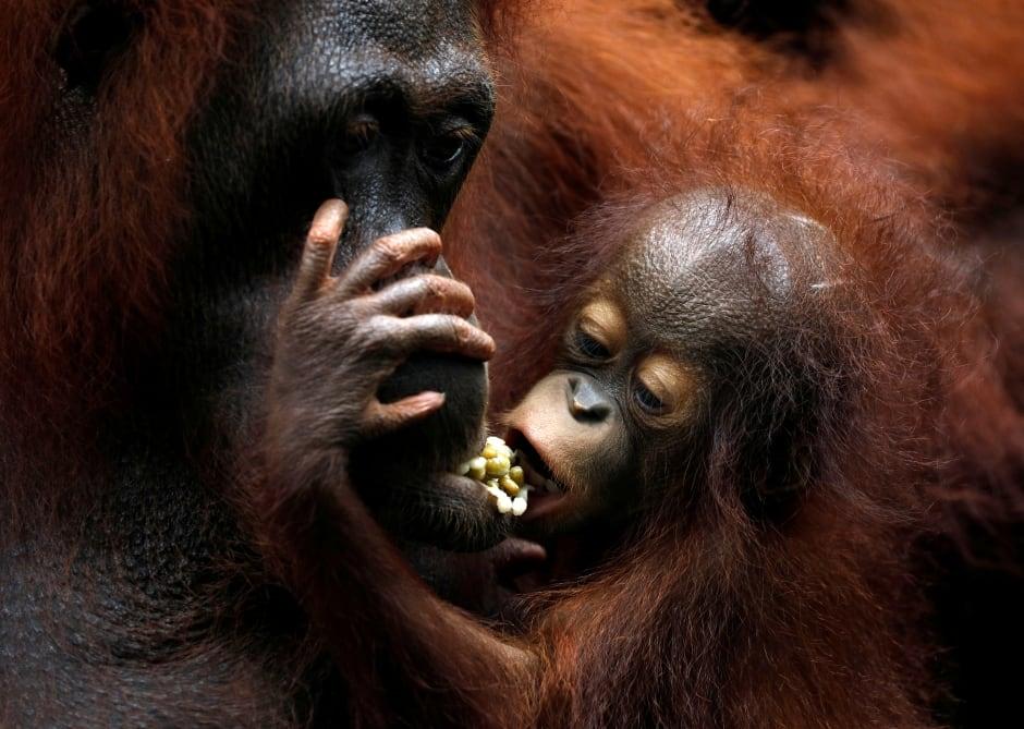 top pics zoo babies