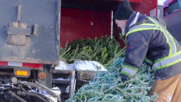 Stephen Howlett stuffs discarded trees into his garbage truck during the annual curbside pickup this week.