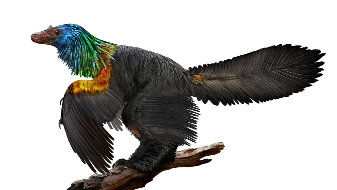 Rainbow-feathered bird-like dinosaur discovered in China