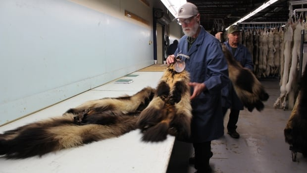 Wolverine pelts with Genuine Mackenzie Valley Fur tags are handled at the Fur Harvesters Inc. auction last week in North Bay, Ontario.