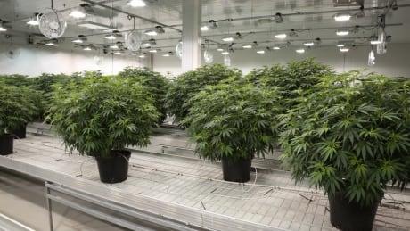 Canopy Growth facility