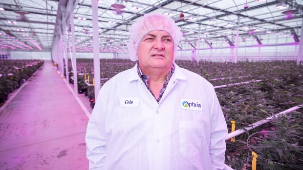 Cole Cacciavillani, a co-owner and the head grower, at Aphria in Leamington, Ont.  Nuuvera Corp, which is opening a cannabis oil lab in Saint John, has agreed to purchase up to 17,500 kilograms of cannabis from Aphria over the next two years.