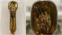 St. Francis Xavier severed arm