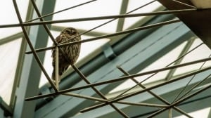 Owl at library