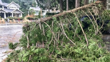 Wind storm Jan. 2018