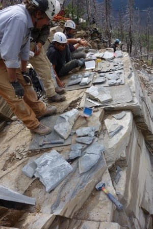 Burgess Shale Marble Canyon
