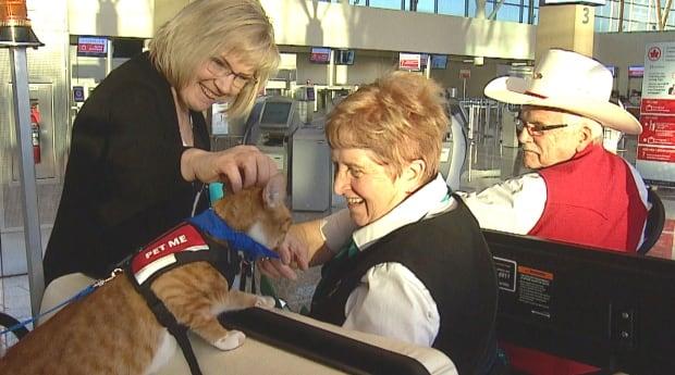 Calgary cat airport