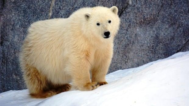Zoo reveals names of orphan polar bear cubs