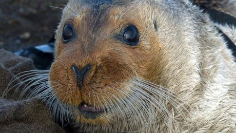 U.S. Supreme Court rejects appeal of bearded seal listing