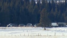 Animal cruelty investigation Calgary