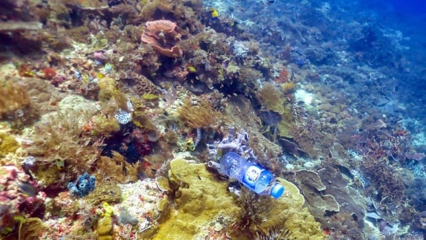 Plastic trash linked to disease in corals, says study