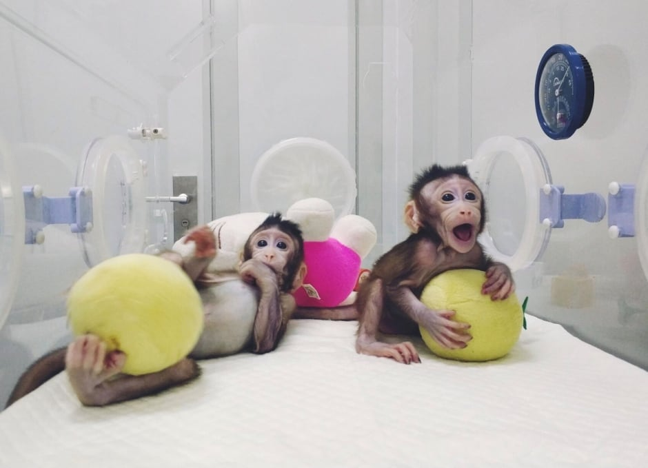 SCIENCE-CLONING/MONKEYS