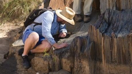 North-American sediments