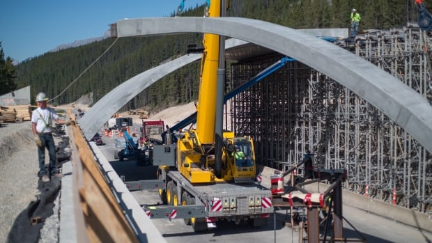 Crews install a wildlife overpass at Kicking Horse Pass on the Trans-Canada Highway in 2017. A conservation group based in Canmore would like to see a similar overpass near Lac Des Arcs, Alta., to prevent wildlife-vehicle collisions.