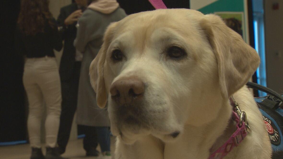 Ottawa Service Dog Training