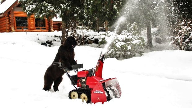 Morgan recently learned how to use the snow blower, though her owner admits she can't do the entire driveway.