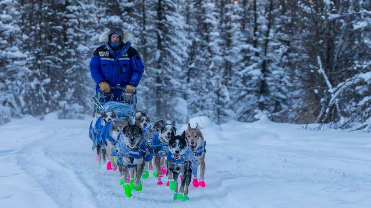 Yukon Quest Musher Recovering From Concussion, Family Says
