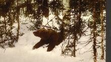 bear emerging from den