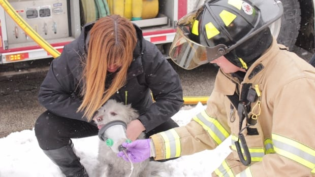 Sarnia firefighters provide oxygen to a dog found in a burned building on Wiltshire Drive Thursday.