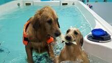 2nd Chances Canine Aquatic Centre