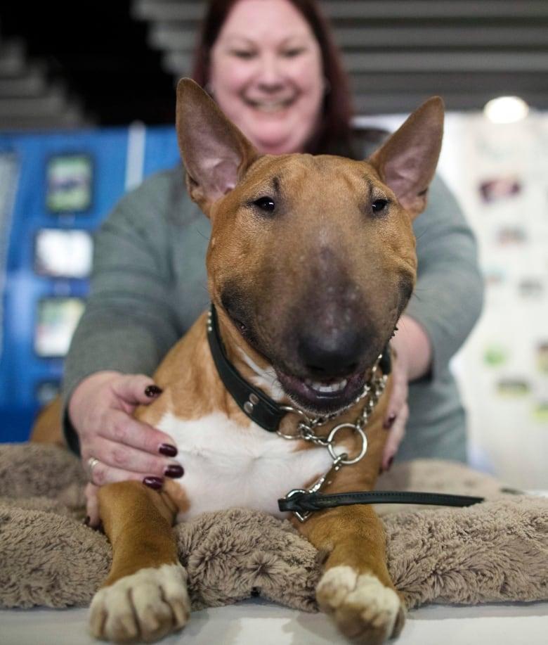Caledon Kennel Club Dog Show