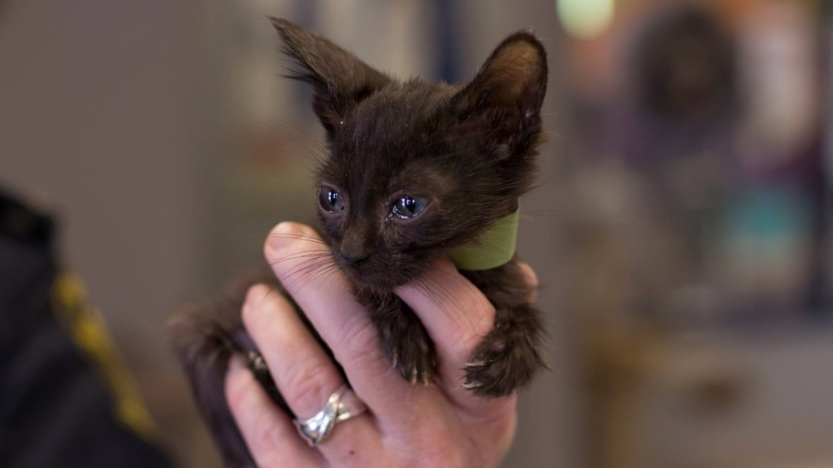 'It was cats everywhere,' humane society head says after 146 seized from Ontario home
