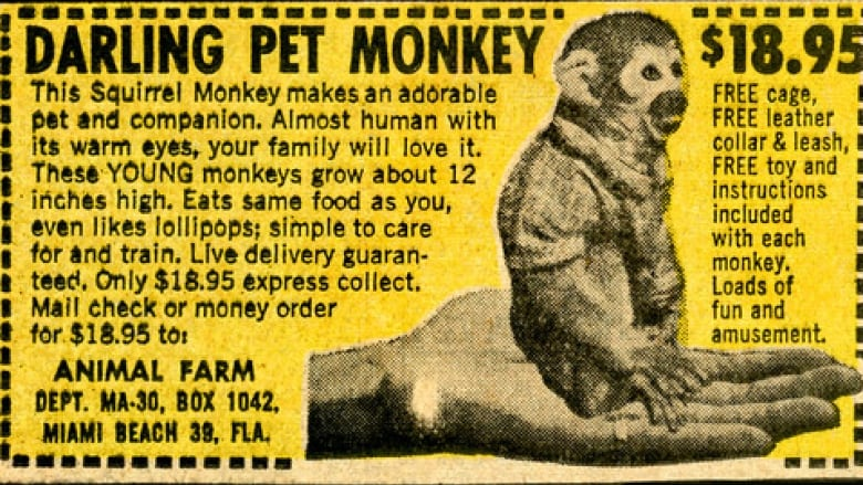 mail order monkeys amp other crazy comic book ads cbc radio