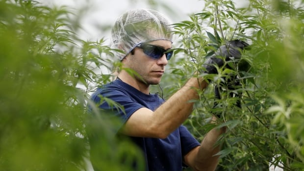 Pot Pharm: Booming Canada weed sector plots next-wave medicines