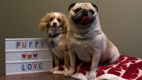 Puppy love: Honey and Pugsley tie the knot at Edmonton animal shelter