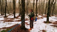 Scott Whitelaw checks one of his trees at Sugar Moon Farm mid-February. The snow shortfall made reac