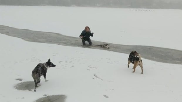 A still from a cellphone video shows the dramatic moment an unidentified woman pulled a dog out of the icy waters of Trout Lake in East Vancouver.