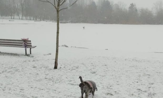 Rescue of dog from frozen B.C. lake caught on video