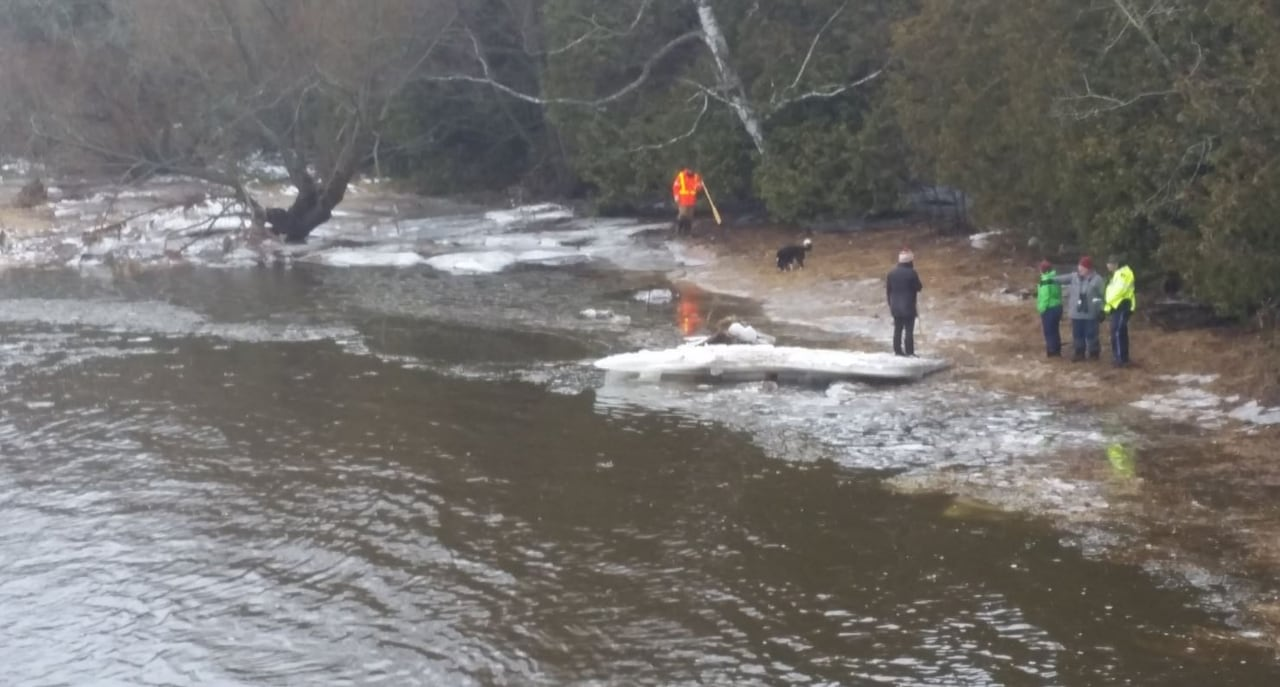 Search for 3-year-old boy swept away by Grand River flood continues
