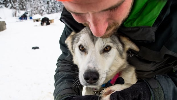 How a craving for misery took this man and 16 dogs to the last great race | CBC News