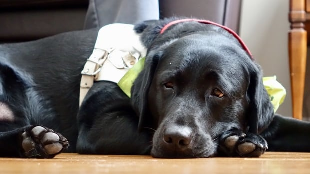 Service Dogs - Canada's Guide to Dogs