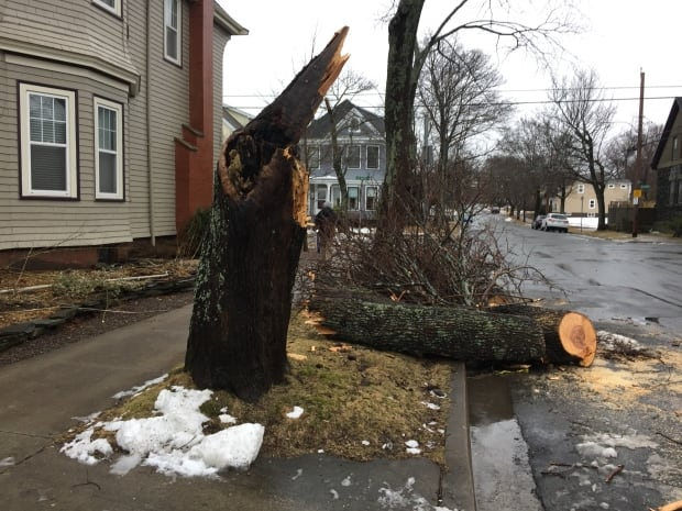 south end halifax tree down storm