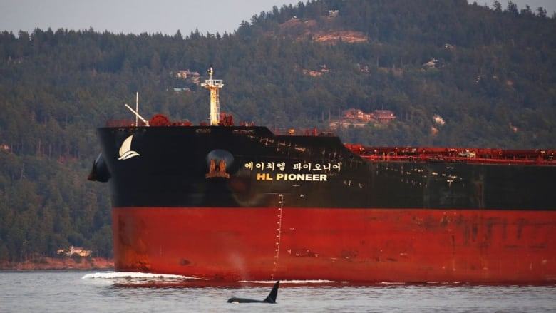 NEB to release new Trans Mountain report on possible marine impacts