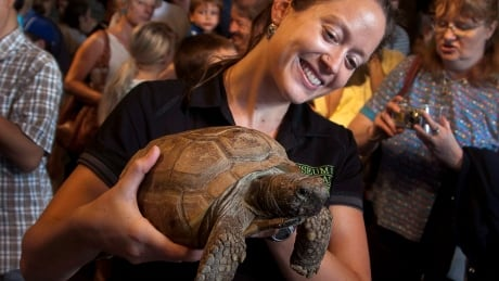 How a $5 roadside tortoise turned into a Halifax icon