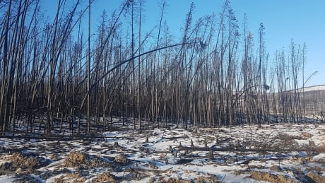 Wildfire report to help Cariboo prepare for next emergency thumbnail