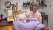 PEI cat bed Stitches