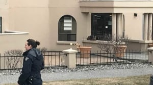 Cougar cub tranquilized in downtown Kamloops