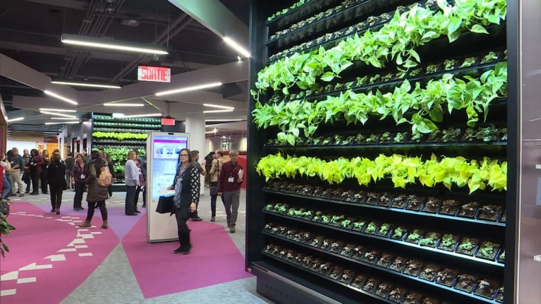 Living Walls Covered In Plants Help Keep The Air Clean At Concordias Newly Renovated Webster Library Cbc