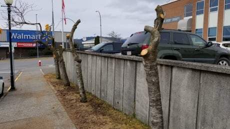 Cherry trees removed